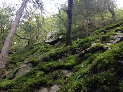 forest photo .JPG